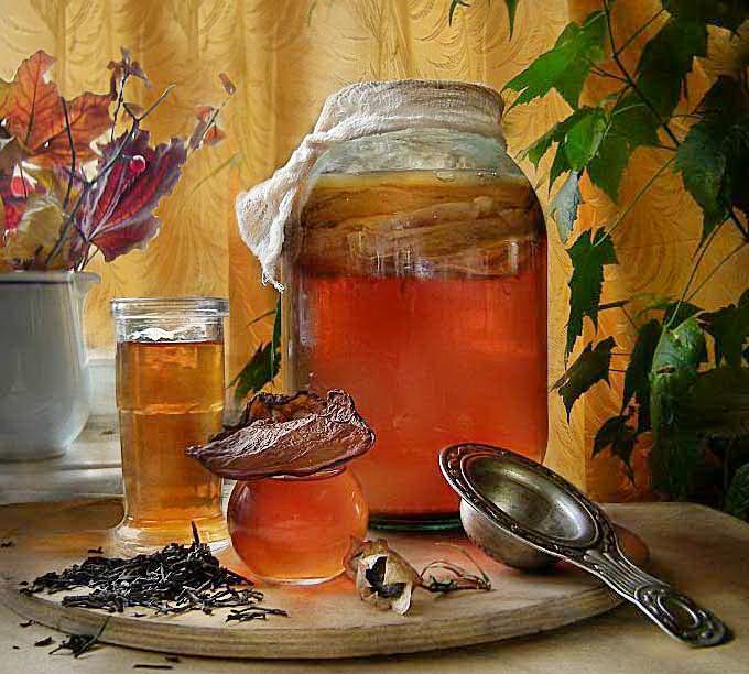 чайный гриб суперфуд