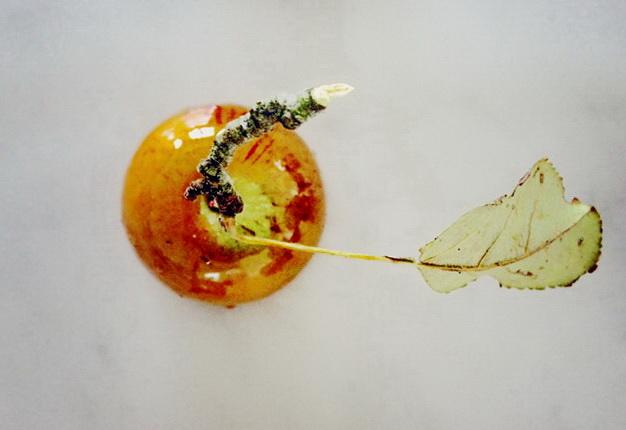 осенние рецепты с яблоками