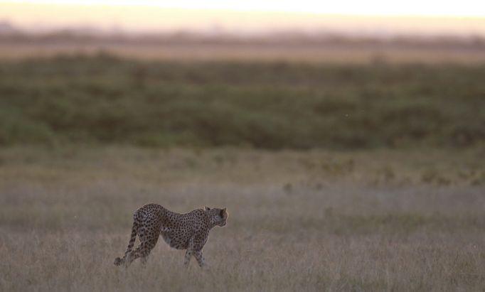 Кения природа 1