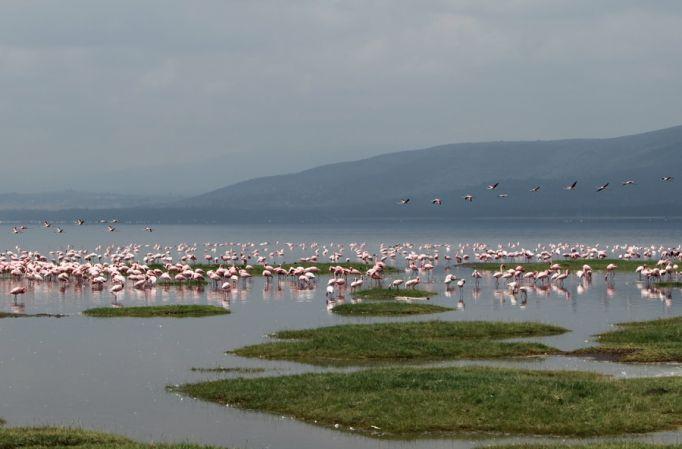 Кения природа 4