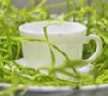 Сервировка стола: Ужин на траве