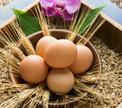 «Счастливое яйцо» каждому американцу!