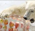 Японское мороженое для русского медведя