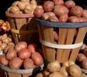 Картофель. Как выбрать лучший?