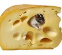 Под Минском – бесплатный сыр без мышеловки