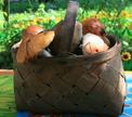 <b>Опрос Oede.by</b><br>Куда мы ходим собирать грибы?