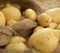 <b>Опрос Oede.by</b><br>Картошка: копаем, готовим, едим!