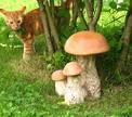Пикник в лесу: что взять с собой?