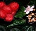 Заменит ли натуральный краситель нитриты?