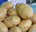 Контрольная закупка: молодой картофель