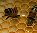 Мед, прополис, воск, пыльца для здоровья молодца!