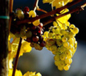 Германия: царство белых вин