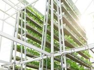 Овощные фермы в небоскребах