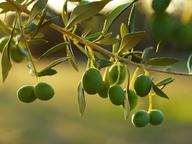 Что нужно знать о маслинах и оливках