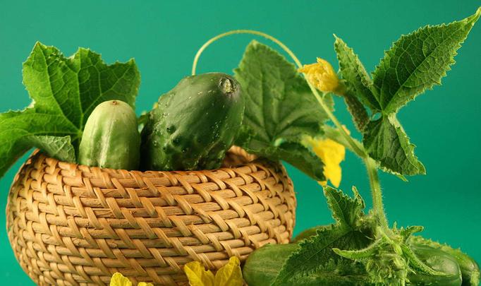 Огурец с секретом, или Сколько нитратов в белорусских овощах
