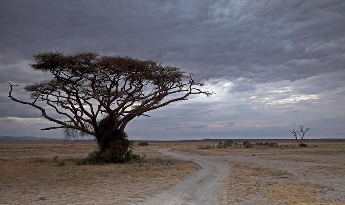 Отдых в Кении: жаркое из страуса под фруктовым соусом, а на десерт – «мандаази»