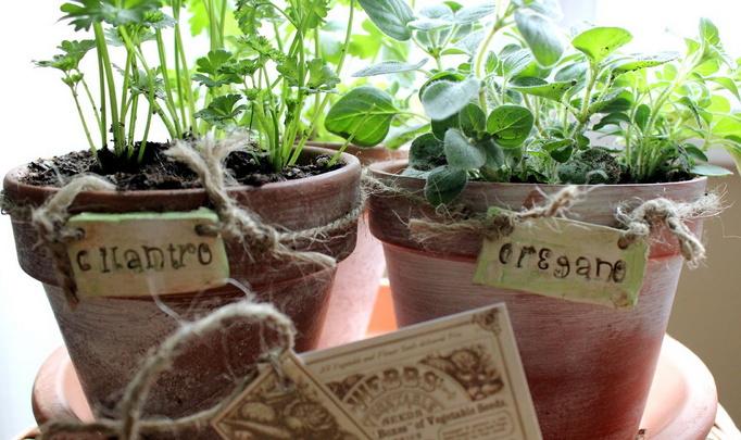 Что растят в квартирах белорусы?
