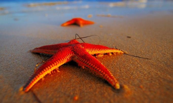 На что клюют звёздные «рыбки»?